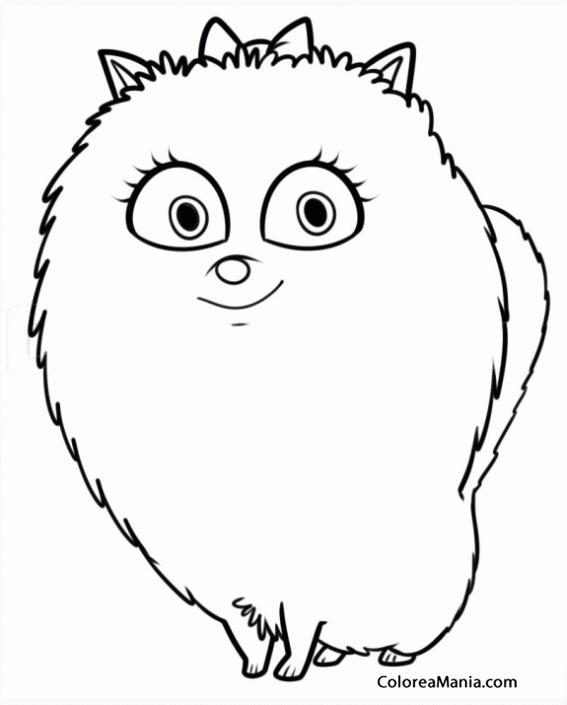 Colorear Gidget, la pomerania de (La vida secreta de las Mascotas ...