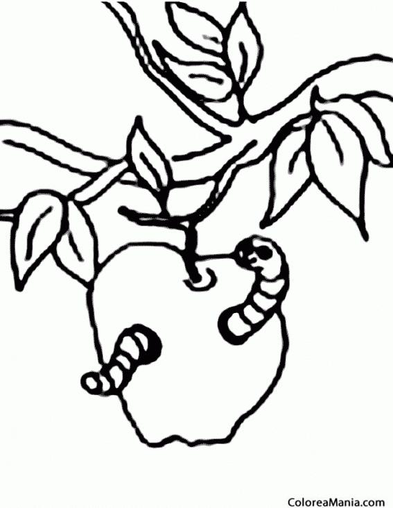 Manzanas Para Pintar E Imprimir Dibujos De Una Manzana Para Colorear