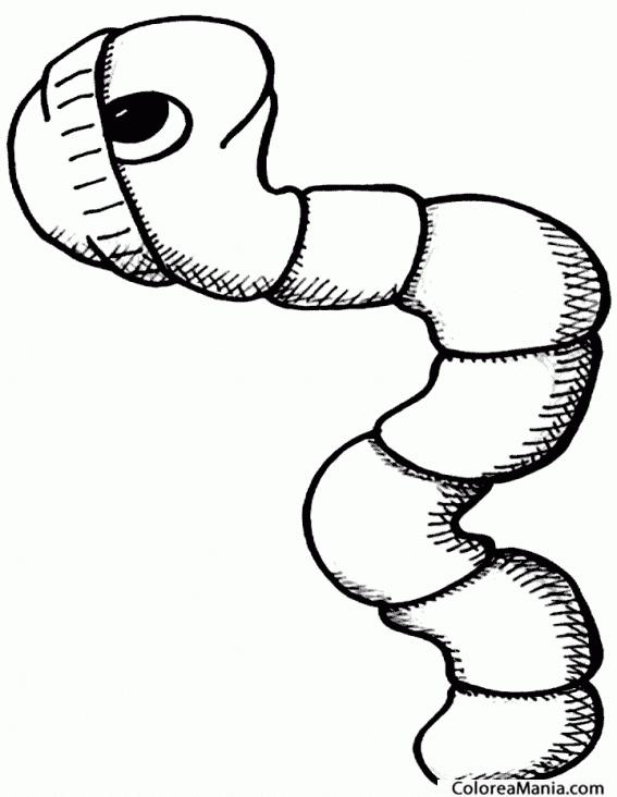 Раскраска или картинка червячка