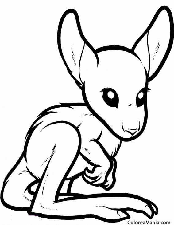 Colorear Bebé Canguro (Animales de la Sabana), dibujo para colorear ...