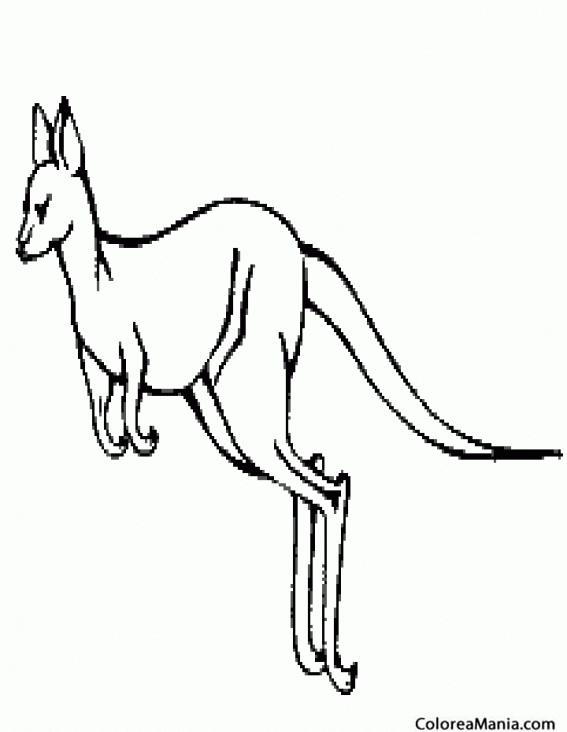 Colorear Canguro Dibujo Realista Animales De La Sabana