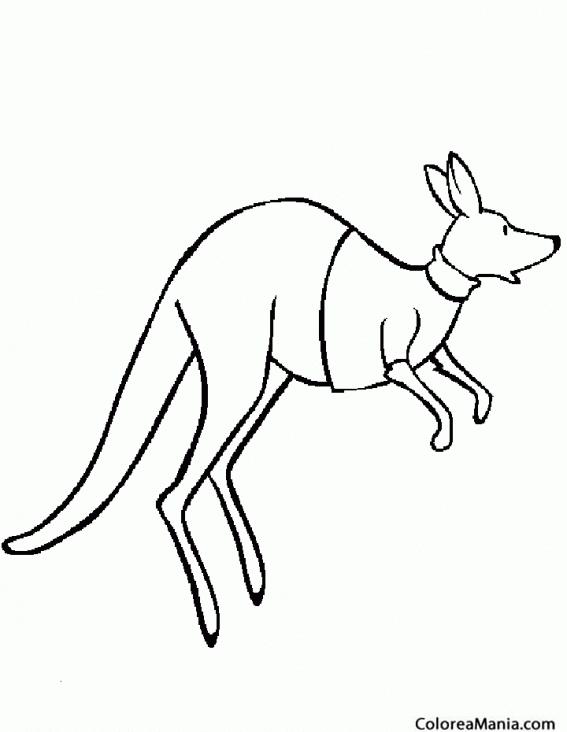 Colorear Canguro con camiseta saltando (Animales de la Sabana ...