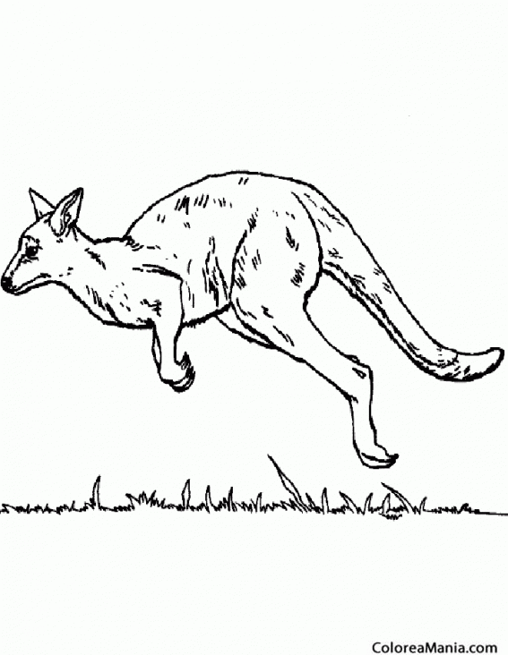 Colorear Canguro saltando 3 (Animales de la Sabana), dibujo para ...
