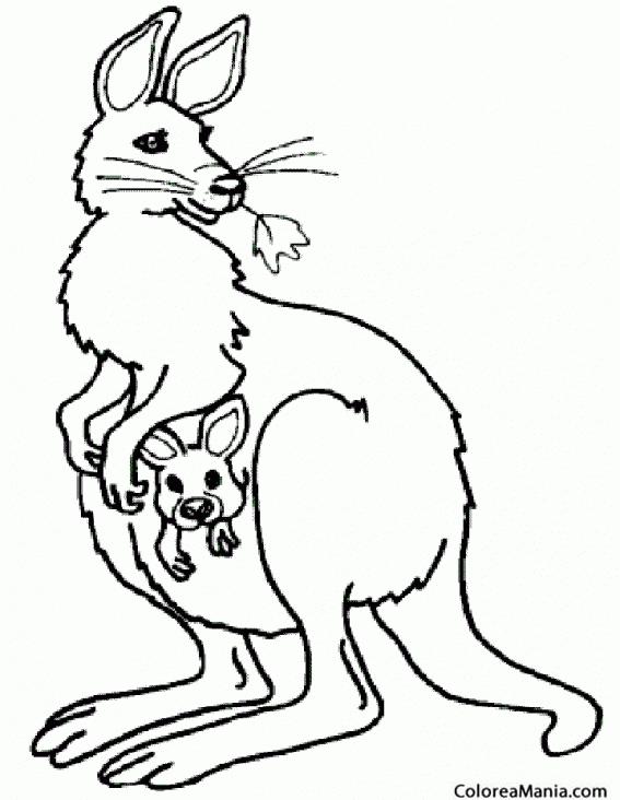 Colorear Canguro comiendo hojas (Animales de la Sabana), dibujo para ...