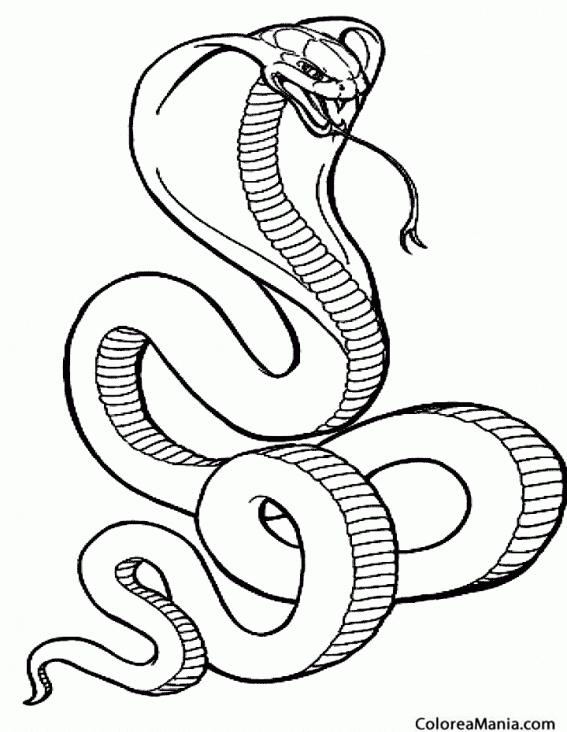 Worksheet. Colorear Serpiente Cobra real Reptiles dibujo para colorear gratis