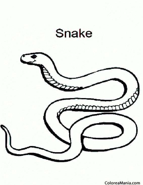 Colorear Serpiente cabeza de cobre Reptiles dibujo para