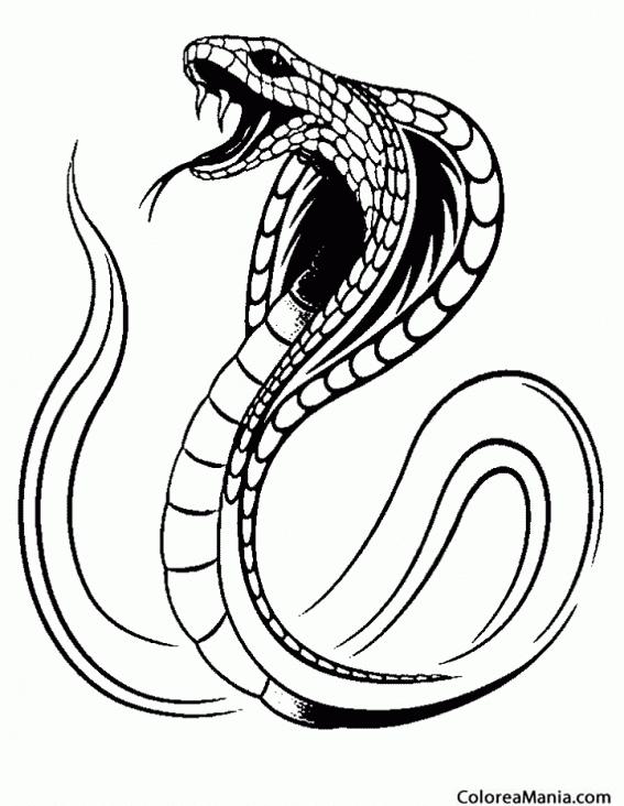 Colorear Serpiente cobra amenazando Reptiles dibujo para