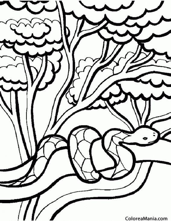 Colorear Serpiente En árbol Reptiles Dibujo Para Colorear Gratis