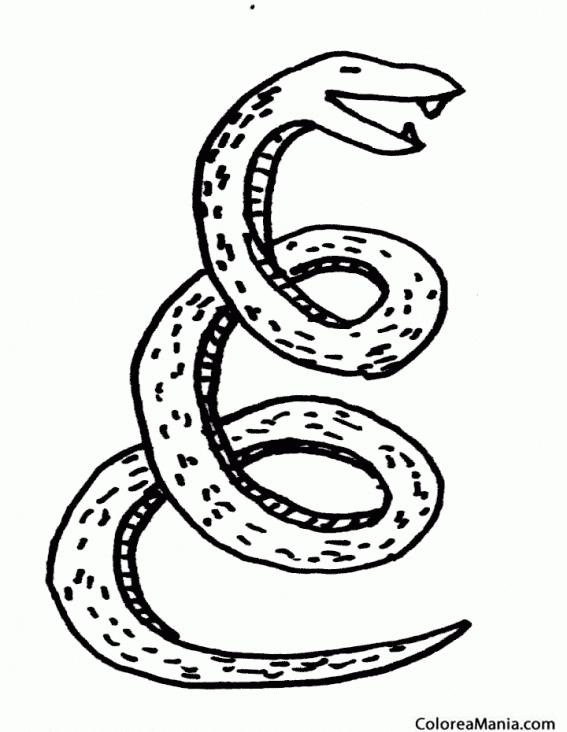 Colorear Serpiente Culebra de collar Reptiles dibujo para