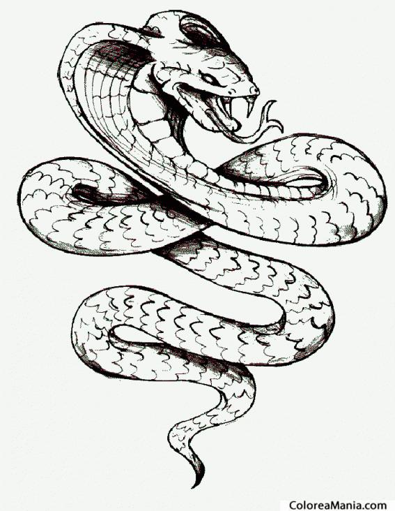 Colorear Serpiente Cobra Real 2 Reptiles dibujo para colorear
