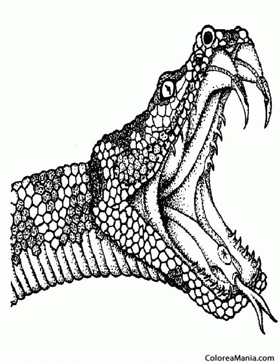 Colorear Cabeza Serpiente Tatuajes Reptiles Dibujo Para Colorear