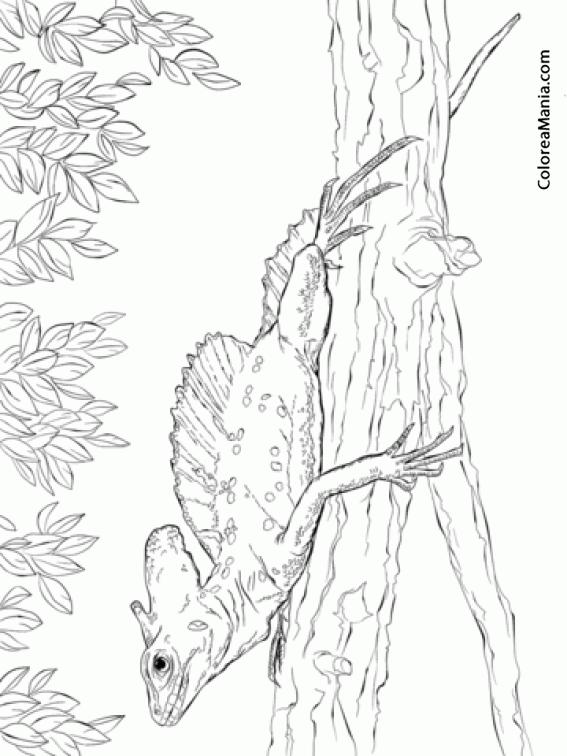 Colorear Lagarto Basilisco Verde (Reptiles), dibujo para colorear gratis