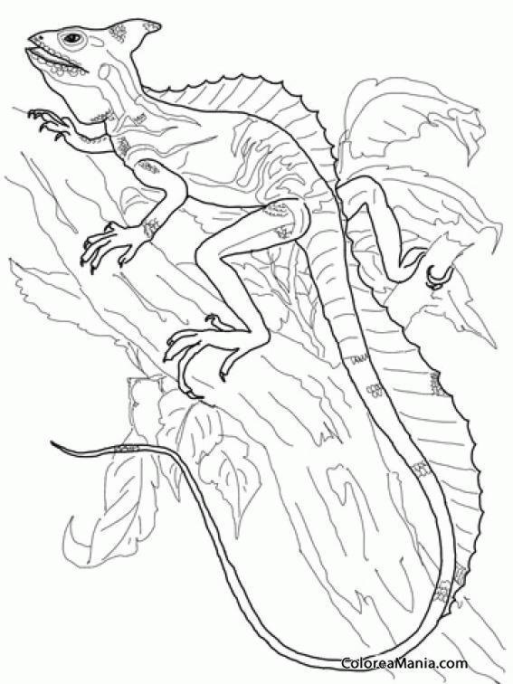 Colorear Lagarto Basilisco subiendo por árbol (Reptiles), dibujo ...
