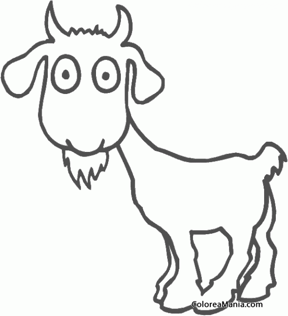 Colorear Cabra Ojos Redondos Animales De Granja Dibujo Para