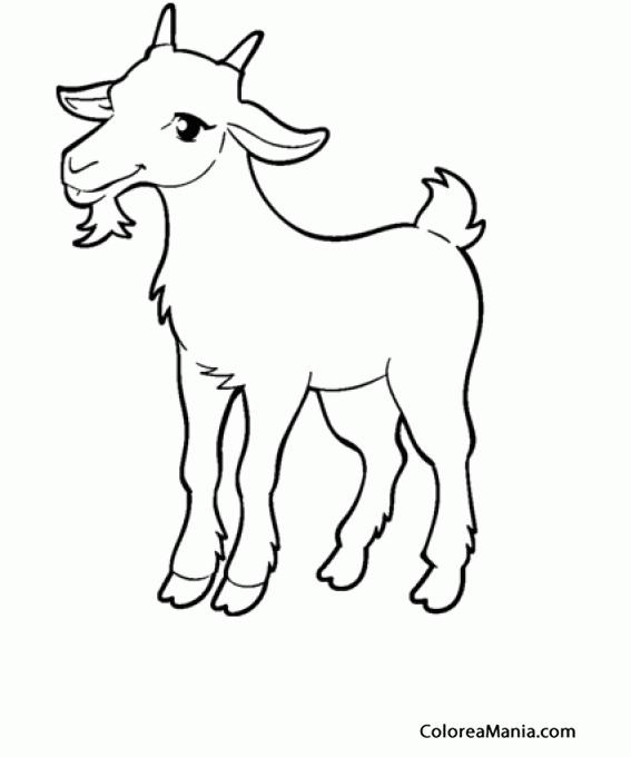 Colorear Cabras cola blanca (Animales de Granja), dibujo