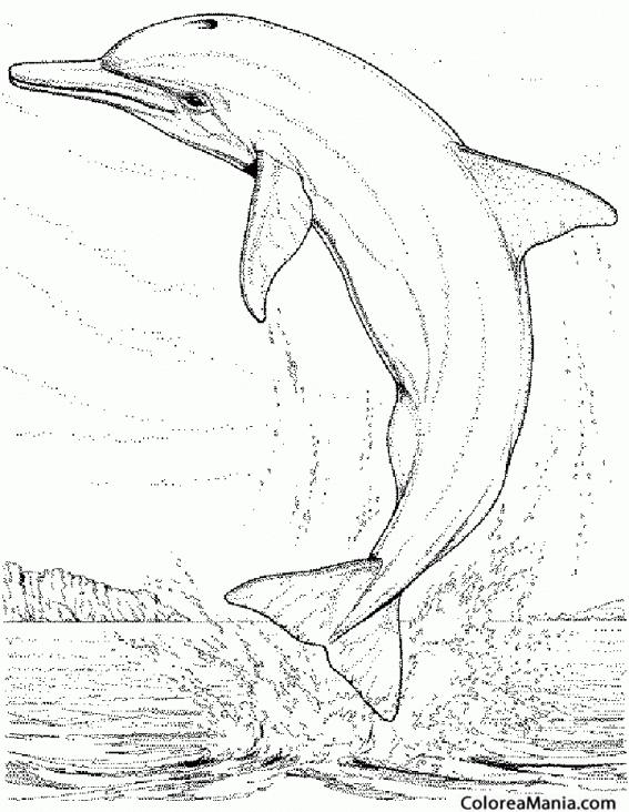 Colorear Delfin Saltando Dibujo Realista Animales Marinos