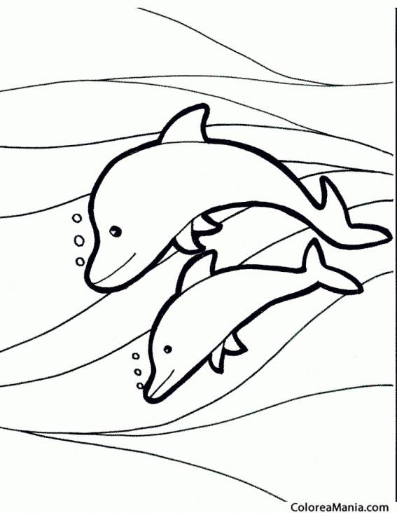 Colorear Delfín Madre Y Delfín Hijo Animales Marinos Dibujo Para