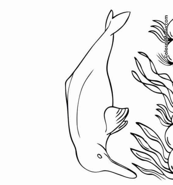 Colorear Delfín del río Amazonas (Animales Marinos), dibujo para