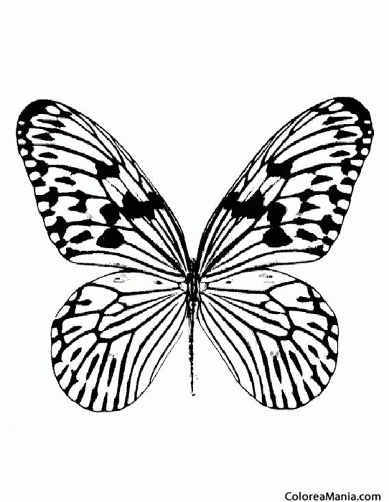 Colorear Mariposa monarca (Insectos), dibujo para colorear gratis