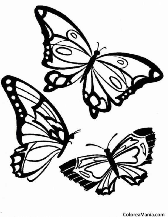 Colorear Tres Mariposa Insectos Dibujo Para Colorear Gratis