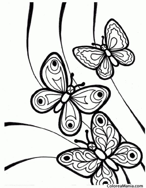 Colorear 3 Mariposas Insectos Dibujo Para Colorear Gratis