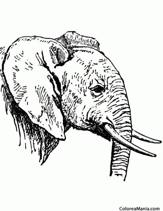 Cómo Dibujar Una Cabeza De Tigre Con Bolígrafo Boceto