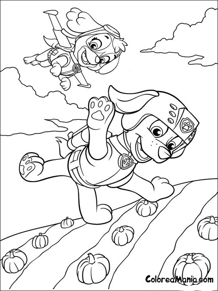 Colorear Zuma Y Skye Volando Patrulla Canina Dibujo Para