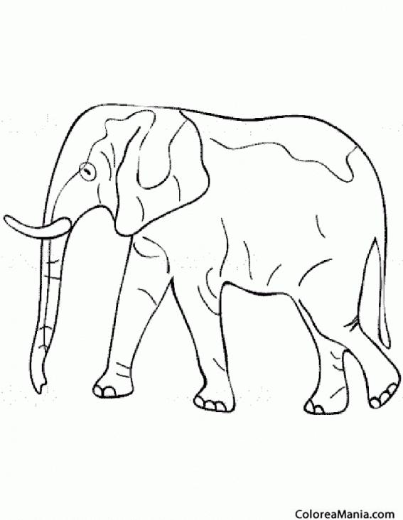 Colorear Elefante lineal Animales de la Sabana dibujo para