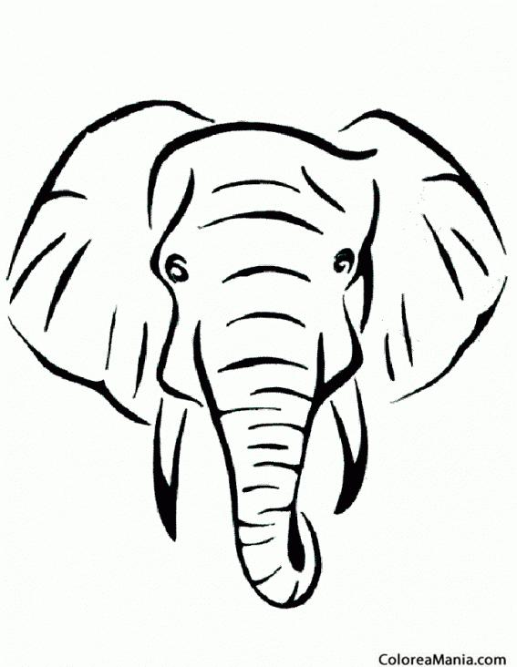 Colorear Cabeza de Elefante, vista frontal (Animales de la ...