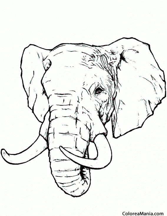 Colorear Cabeza De Elefante Realista Animales De La Sabana