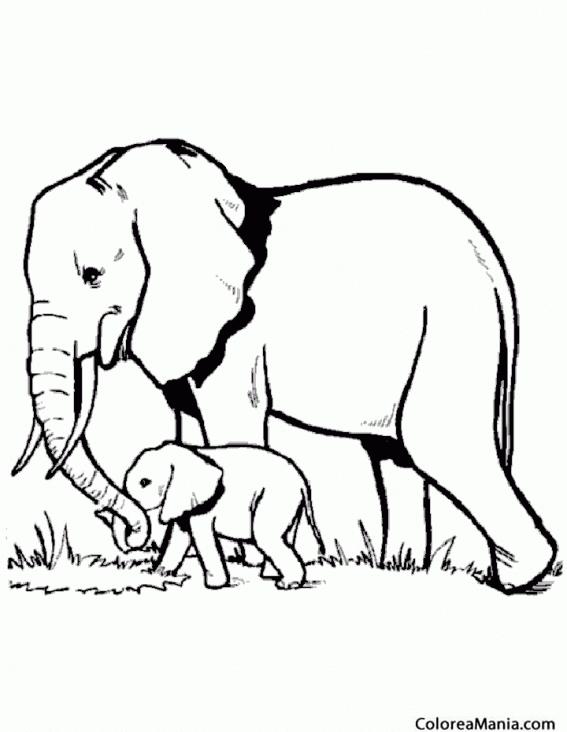 Colorear Mamá Elefante y su hijo (Animales de la Sabana), dibujo ...