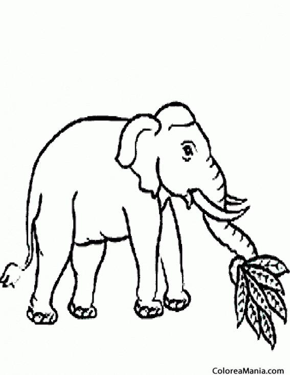 Colorear Elefante Comiendo Plantas Animales De La Sabana Dibujo