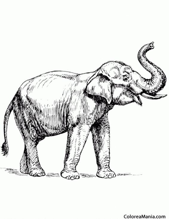Colorear Elefante, dibujo realista (Animales de la Sabana ...