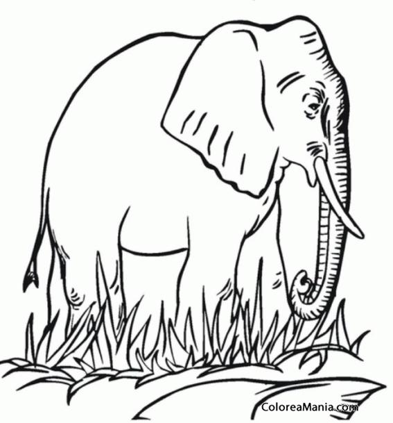 Colorear Elefante africano (Animales de la Sabana), dibujo para