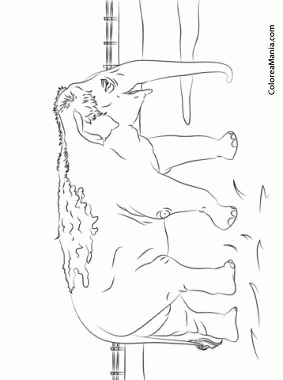 Colorear Elefante indio enfangado (Animales de la Sabana), dibujo ...