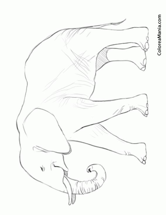 Colorear Elefante Africano De Perfil Animales De La Sabana Dibujo