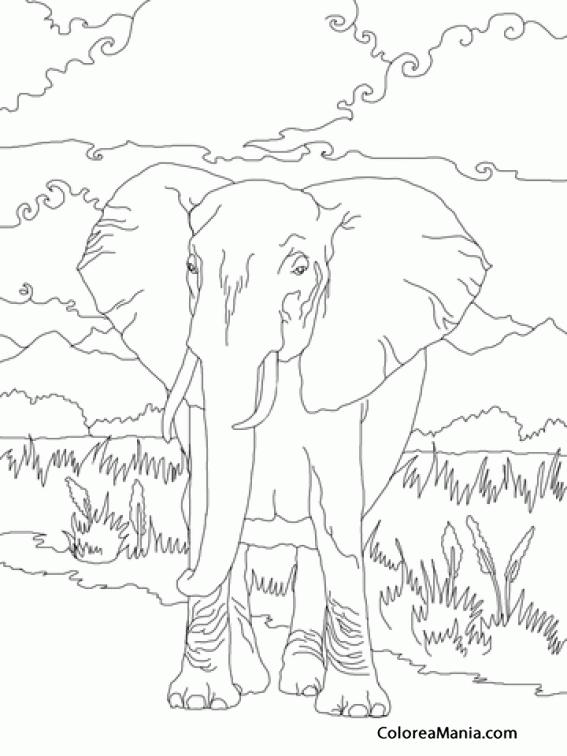 Colorear Majestuoso Elefante Africano Animales De La Sabana