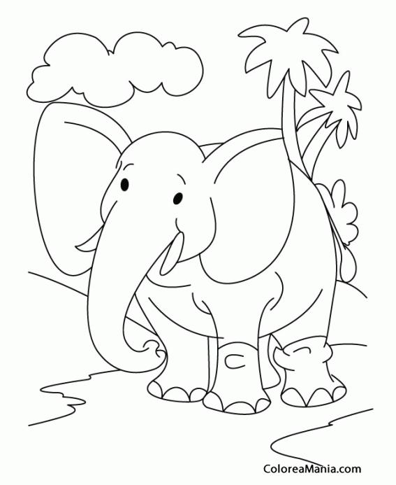 Colorear Elefante Entre Palmeras Animales De La Sabana Dibujo