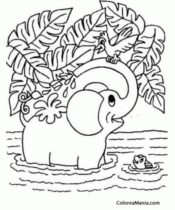 Colorear Elefante Bano En El Rio Animales De La Sabana Dibujo