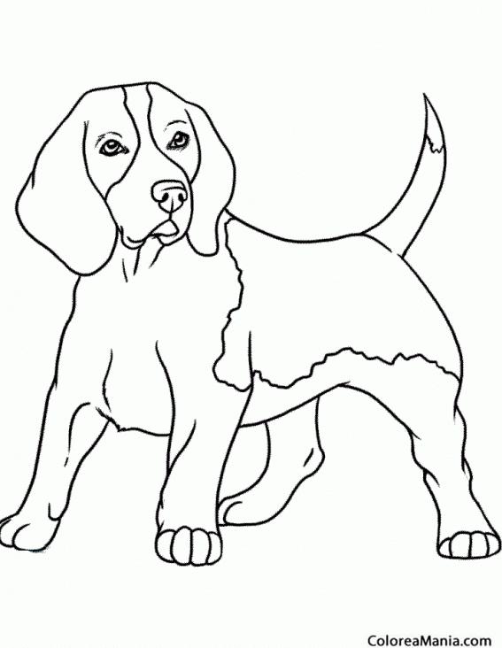 Famoso Beagle Para Colorear Festooning - Páginas Para Colorear ...