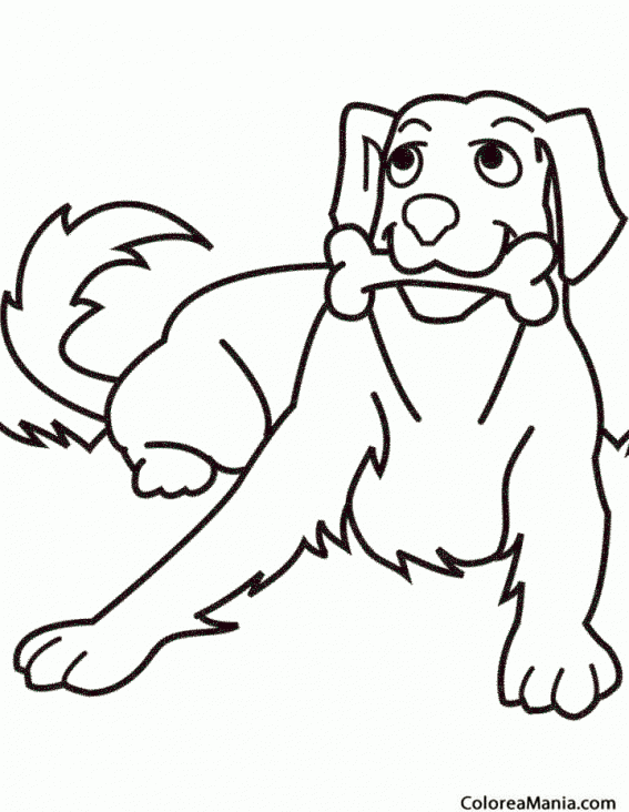 Colorear Perro con hueso Animales Domsticos dibujo para