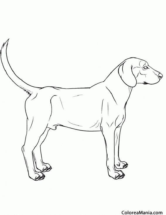 Colorear Perro cazador (Animales Domésticos), dibujo para colorear ...