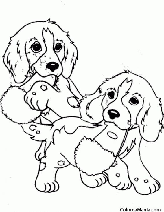 Colorear Perros Jugando Con Zapatillas Animales Domesticos