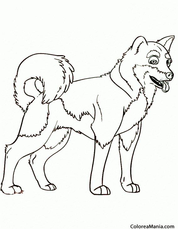 Colorear Perro Alaska malamute (Animales Domésticos), dibujo para ...