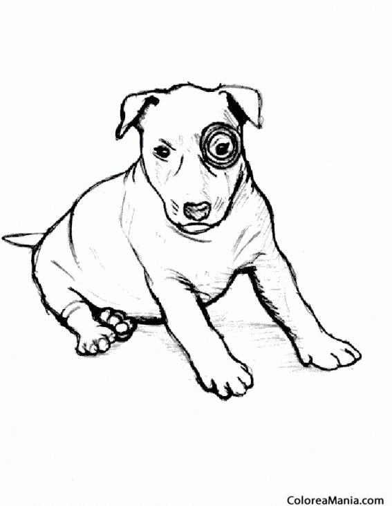 Colorear Perro Bullterrier Cachorro Animales Domésticos Dibujo