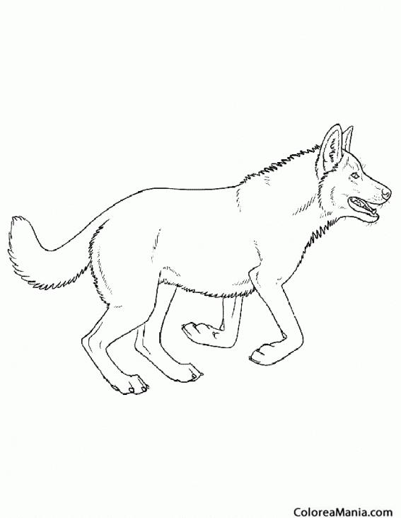 Colorear Perro Lobo Animales Domesticos Dibujo Para Colorear Gratis