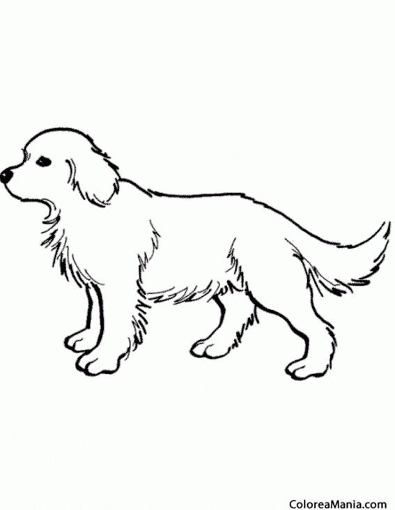 Dibujos Para Colorear De Animales Con Pelos picture gallery