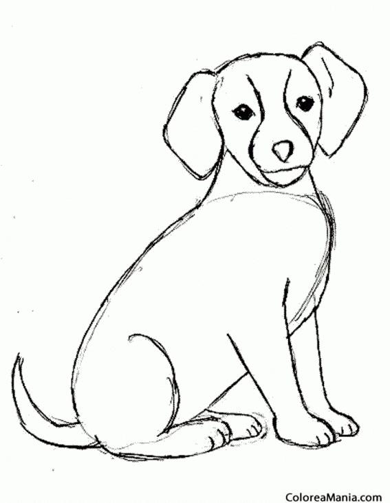 Colorear Perro Sentado 2 Animales Domésticos Dibujo Para Colorear