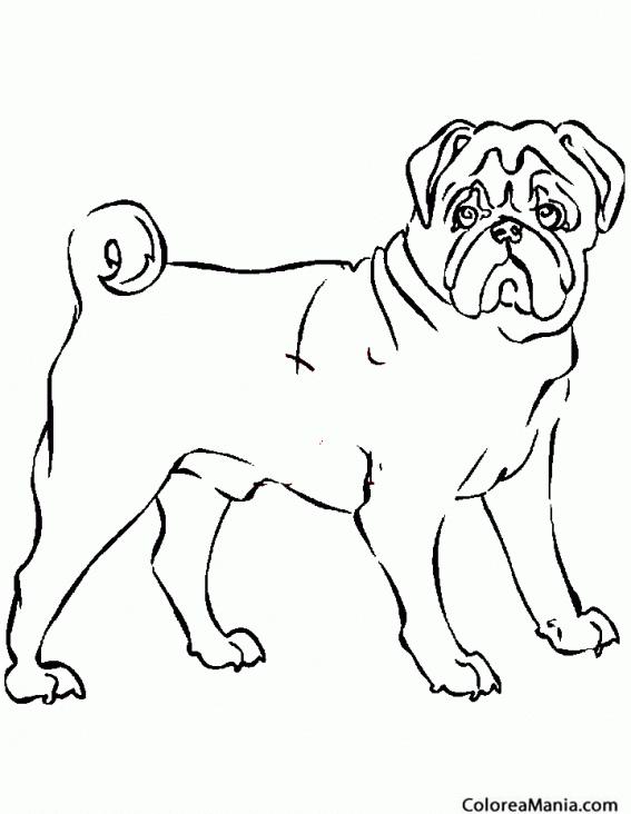 Fantástico Páginas Para Colorear De Baby Bulldog Galería - Páginas ...