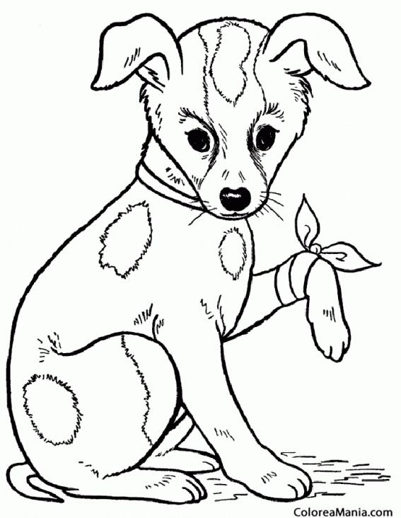Colorear Perro Con Pata Herida Animales Domésticos Dibujo Para